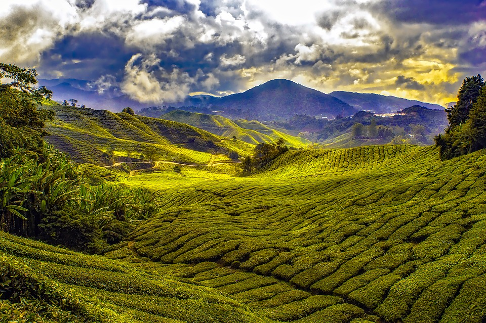Malaysia, Tropics, Mountains, Sky, Clouds, Fields