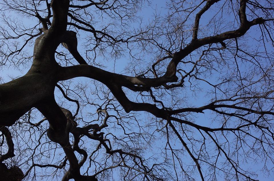 Wood, Sky, Backlight, Twig, Winter