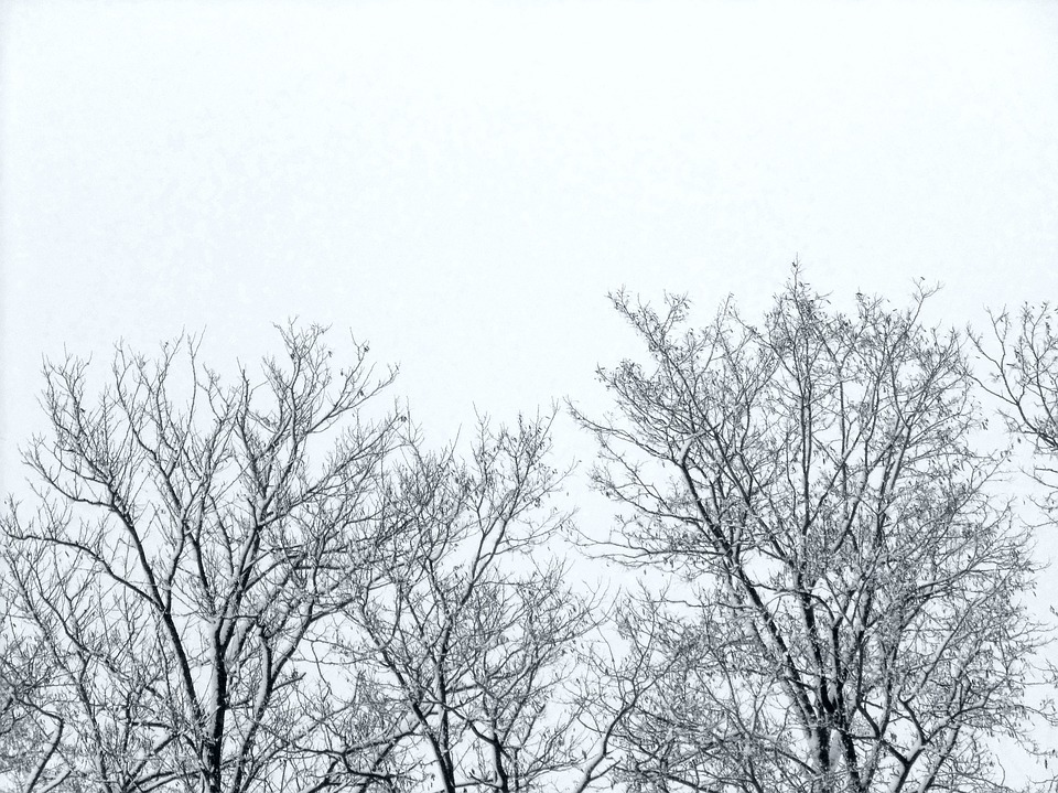 Twigs, Trees, Winter, Sky