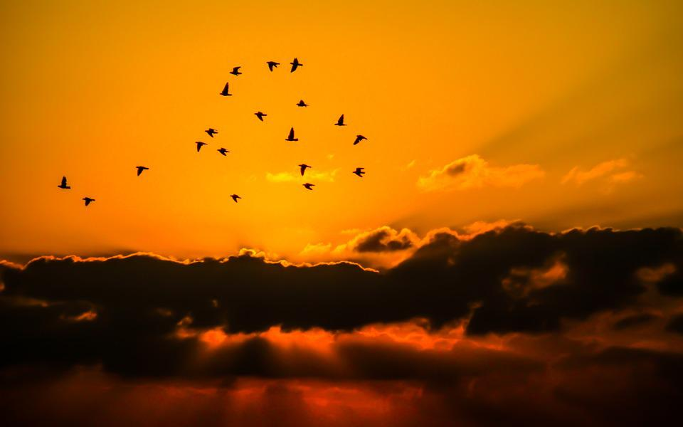 Sky, Birds, Cloud, Orange, Nature, View, Silhouette