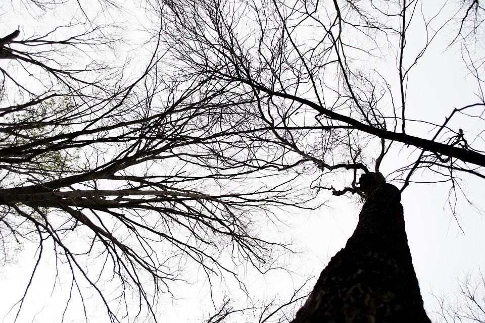 Trees, Line, Tree, Dark, Sky, White, Natural, Outline