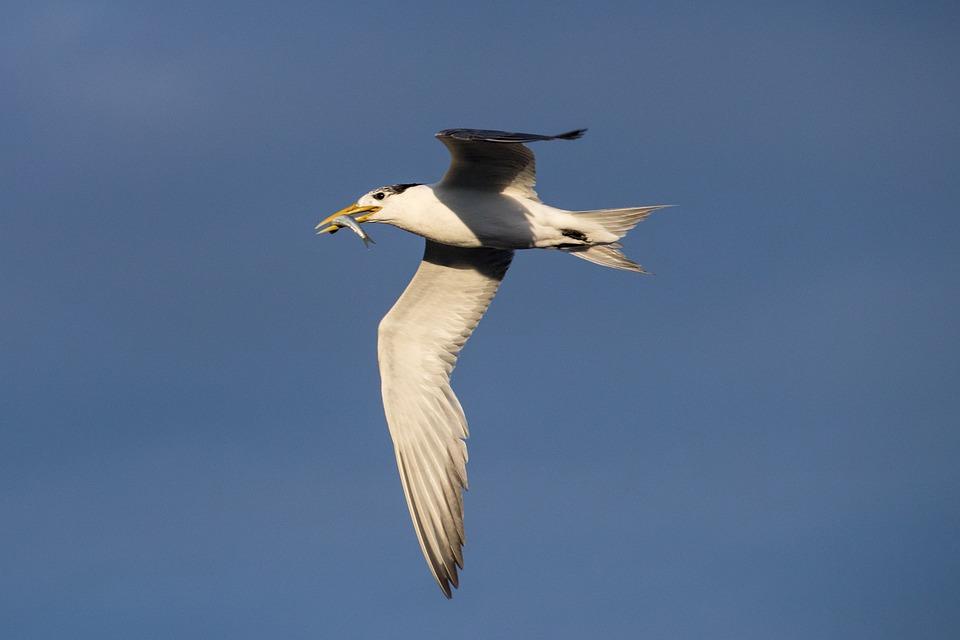Bird, Wildlife, Nature, Outdoors, Sky, Flight, Fly
