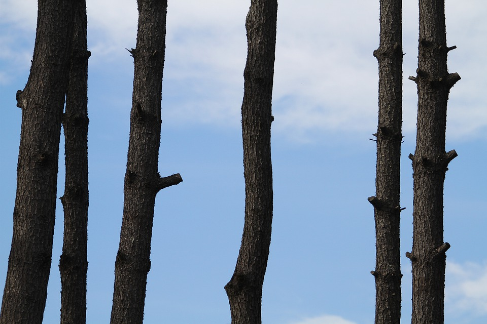 Wood, Window, Sky, Pine