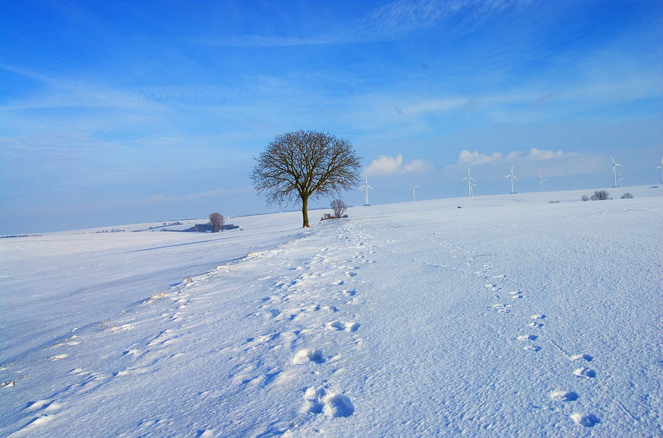 Snow, Winter, Icy, Cold, White, Blue, Sky, Walk