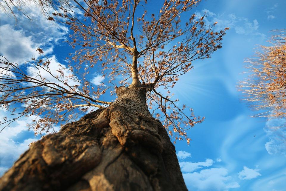 Tree, Leaves, Log, Wood, Perspective, Cloud, Sky