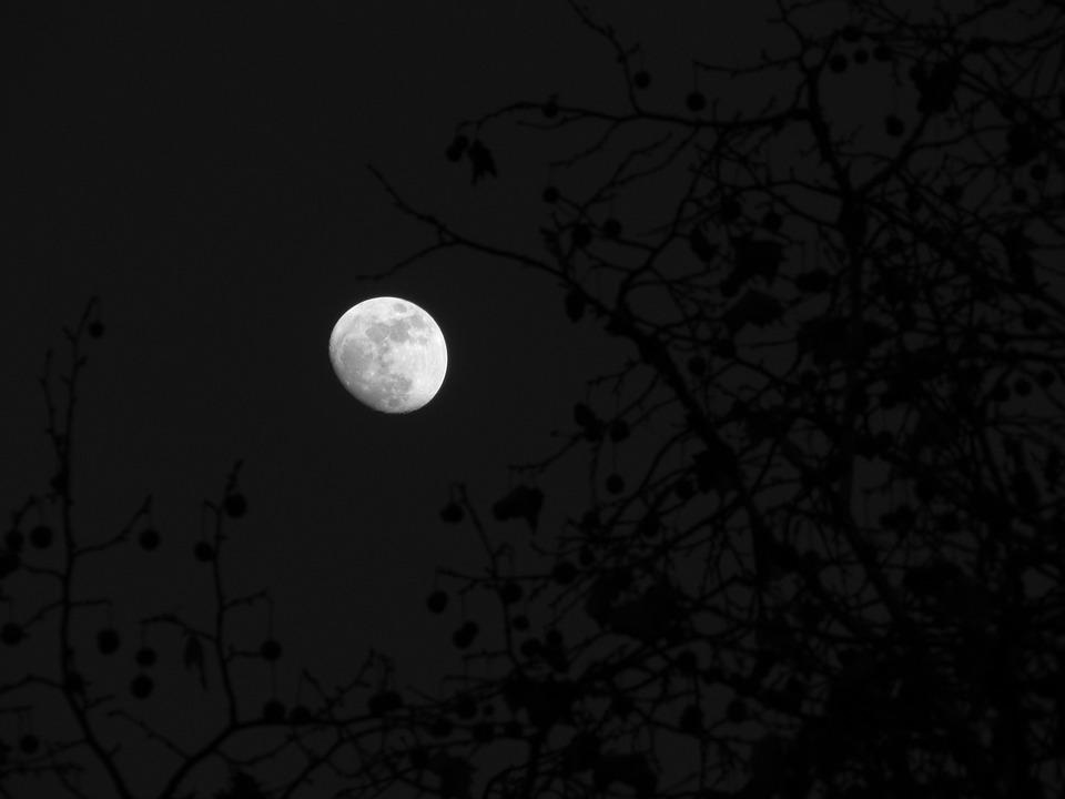 Moon, Wood, Sky