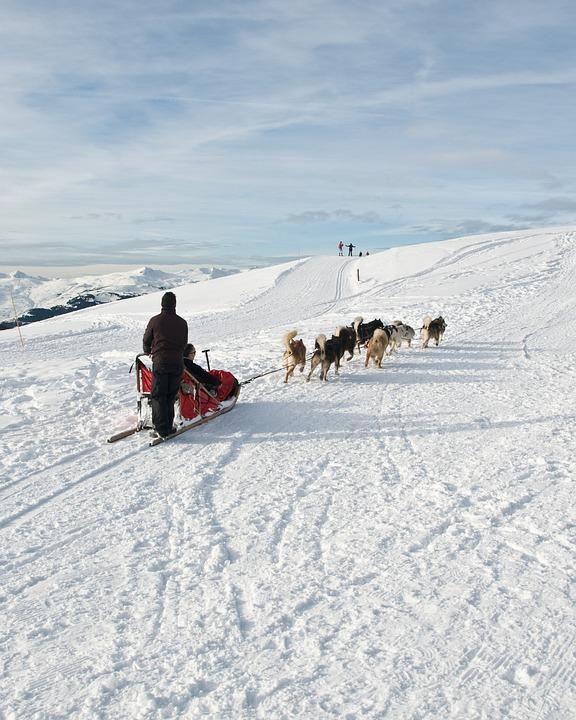 Dog, Sled, Snow, Mountain