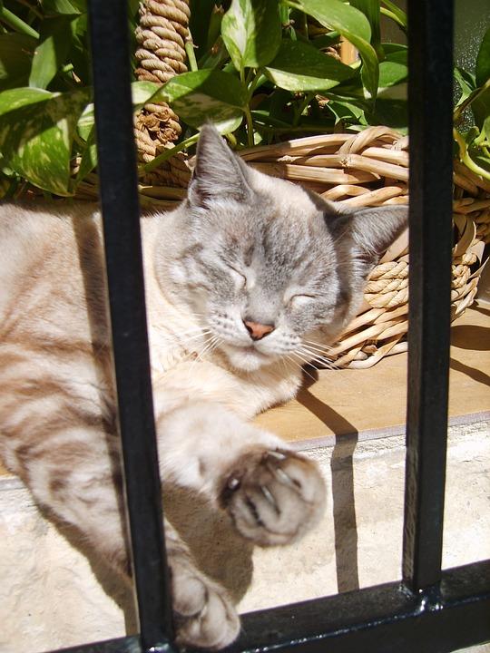 Cat, Altea, Spain, Animals, Sleep, Cats