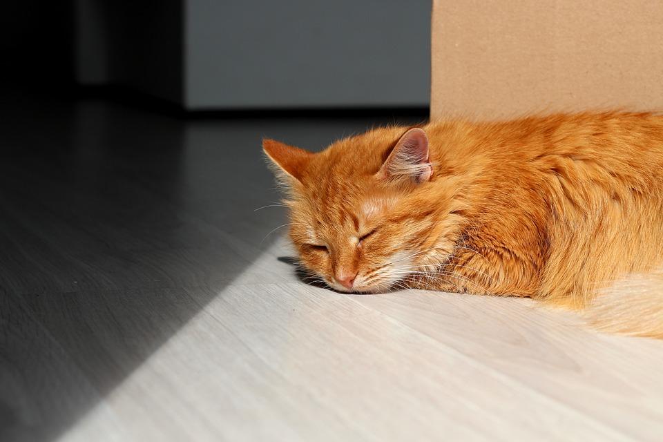 Cat, Red, Pet, Sun, Rest, Sleep, Room, Bright, Striped