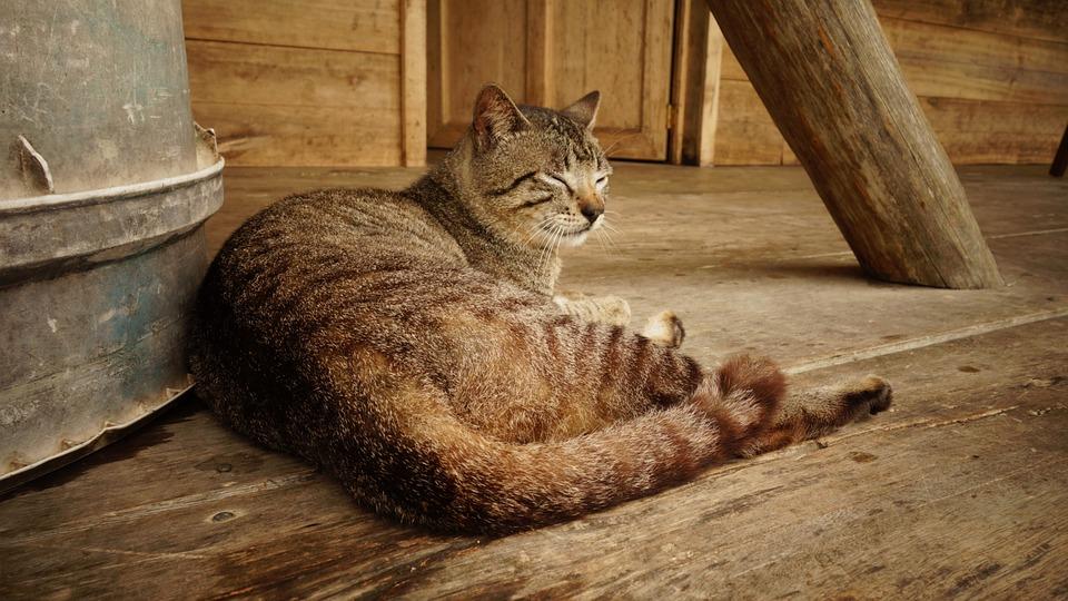 Cat, Cat Mia, Pets, Relax, Sleep