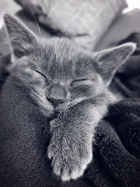 Cat, Kitten, Sleeping, Pet, Feline, Phone Wallpaper