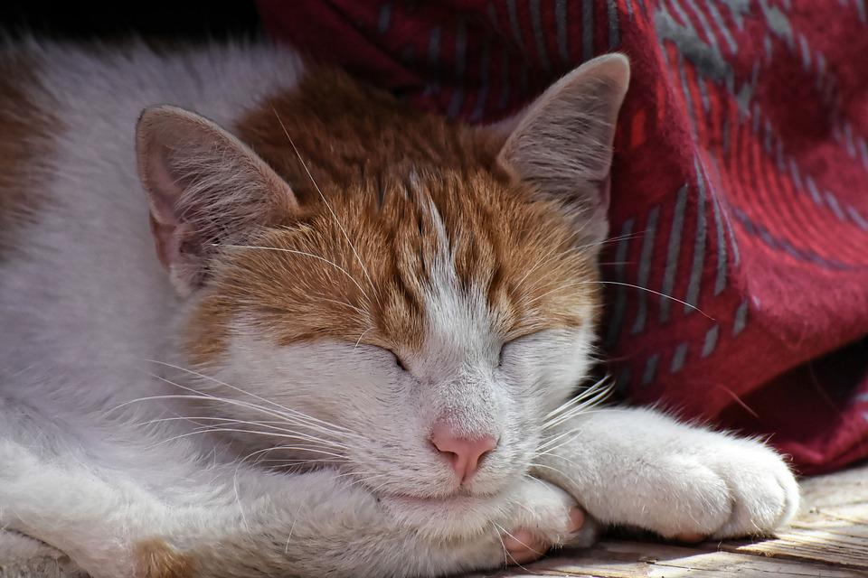 Cat, Sleeping, Pet, Animal Photography, Relaxation