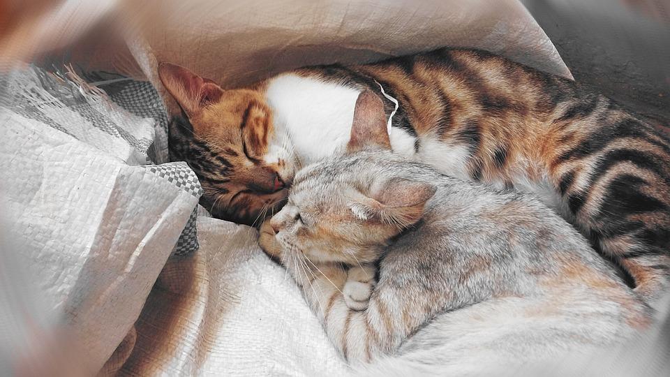 Cats, Cuddling, Sleeping, Domestic, Pet, Outdoor, Fur