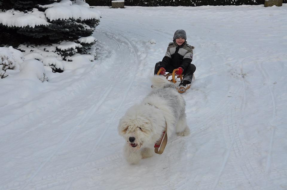 Bobtail, Dog, Winter, Child, Fun, Slide, Sleigh Ride