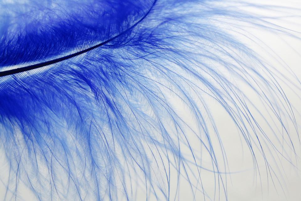 Feather, Blue, Colored, Slightly