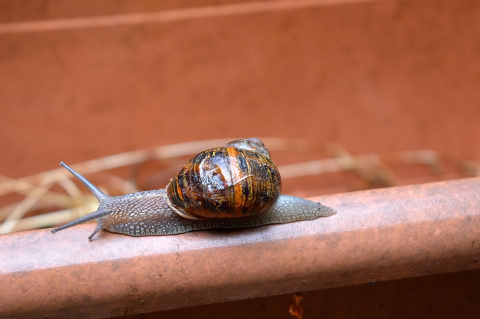 Snail, Shell, Slime, Nature, Animal, Spiral, Slow
