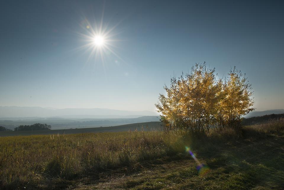 Tree, Country, Autumn, Slovakia, Foliage, Sun