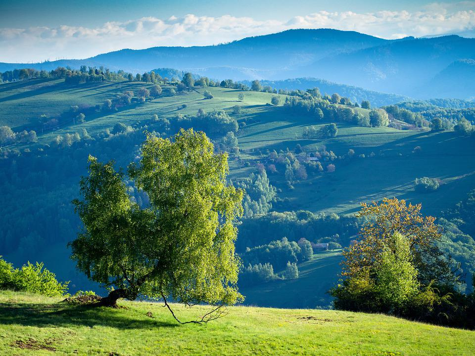 Nature, Tree, View, Slovakia, Wilderness, Europe