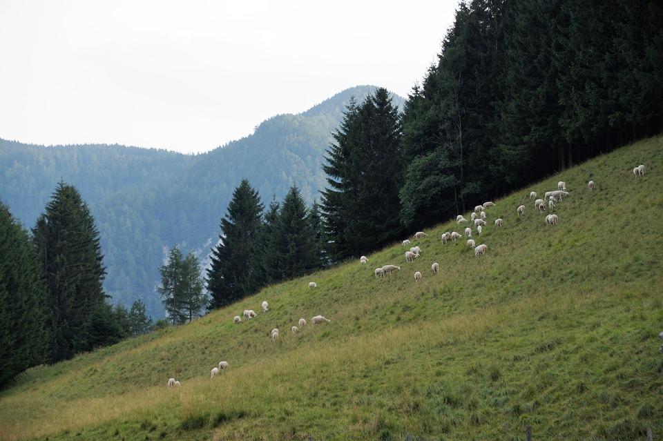 Slovenia, Julian Alps, Mountains, Jezersko, Pastures