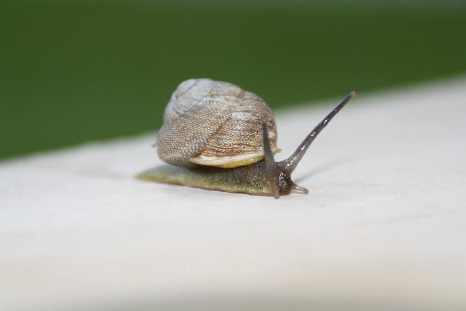 Snail, Slow, Moving, Shell, Slimy, Invertebrate