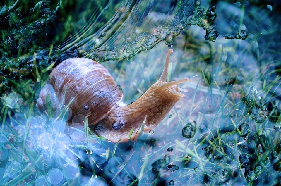 Snail, Shell, Animal, Slowly, Mollusk, Water