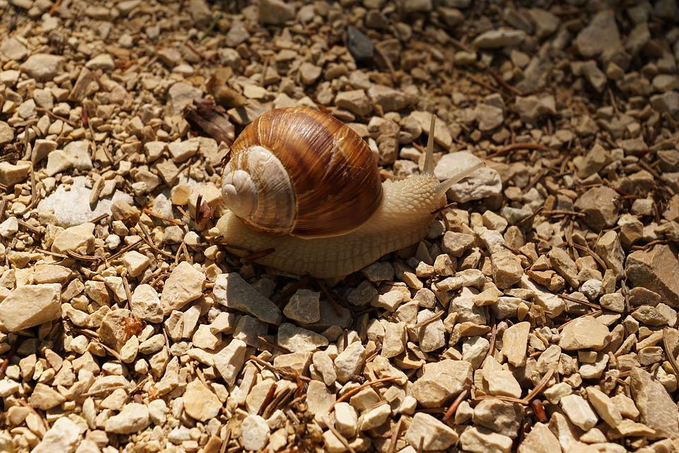 Snail, Crawl, Mollusk, Slowly, Nature
