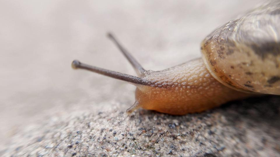 Macro, Slug, Snails, Cell Phone Cameras