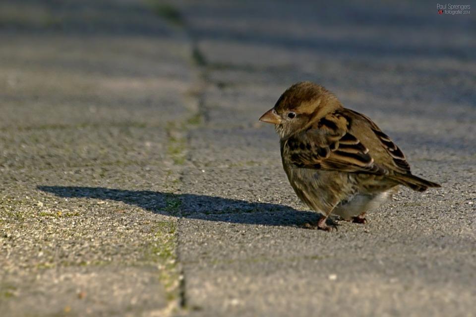 Mus, Bird, Small