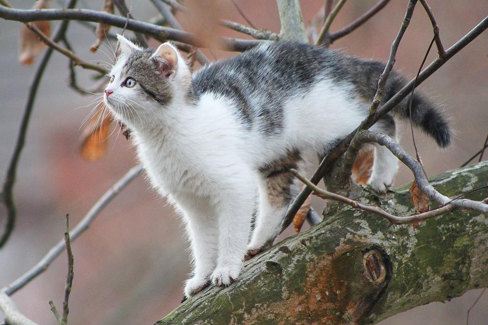 Cat, Tree, Cat In A Tree, Small Cat, Autumn