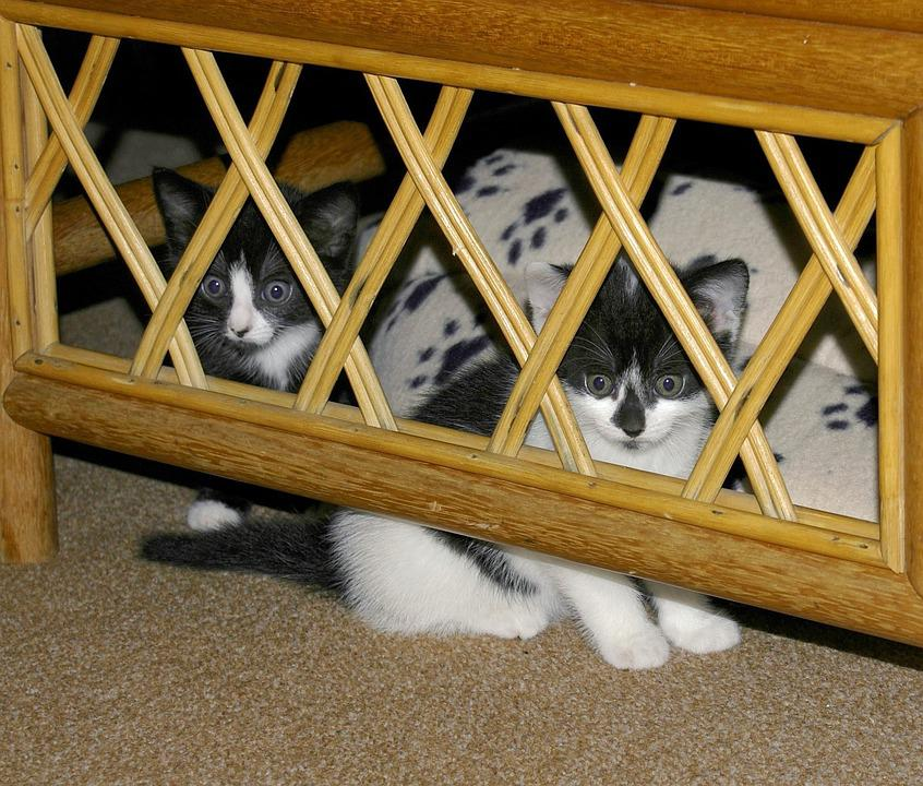 Cat, Kittens, Hidden, Hide, Hiding, Cats, Small