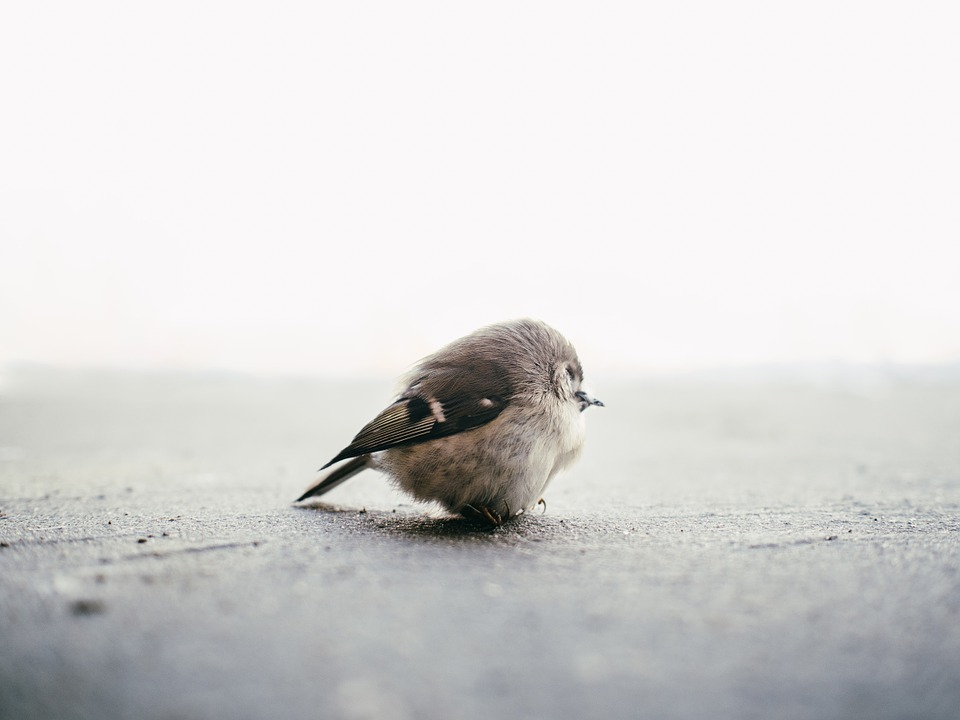 Sparrow, Bird, Cute, Little, Small, Feathers, Funny