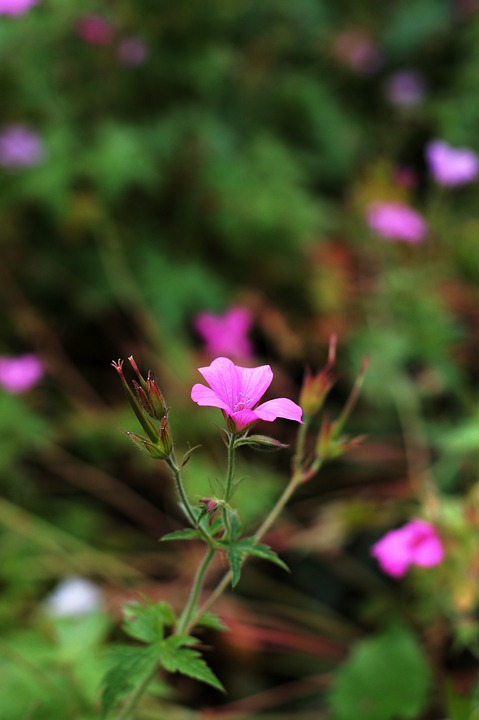 Flower, Pink, Bud, Park, Forest, Outdoors, Small