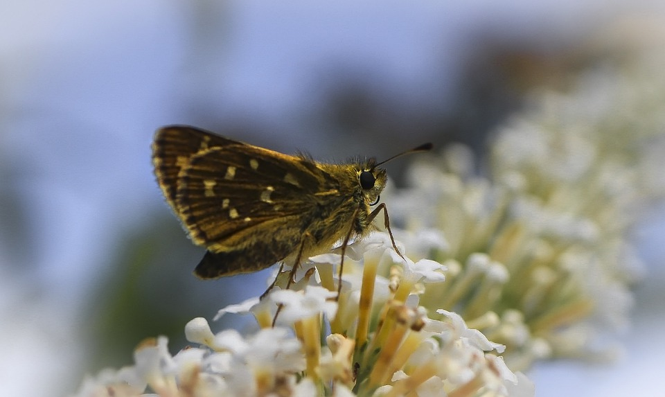 Butterfly, Insect, Flowers, Small, Summer