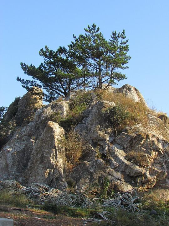 Rock, Pine, Beach, Landscape, Sea Pines, Small Global