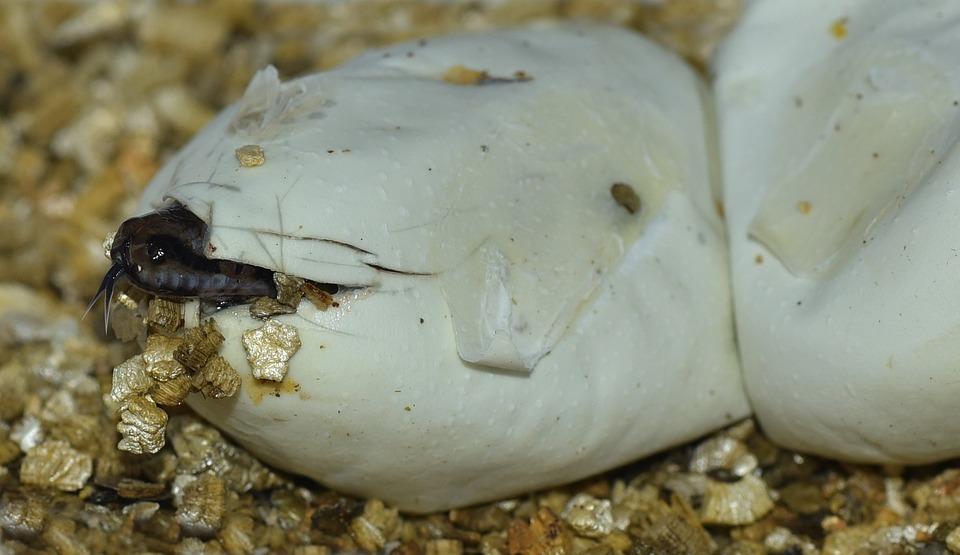 Egg, Snake, Hatch, Small, Baby, Breeding, Own Offspring