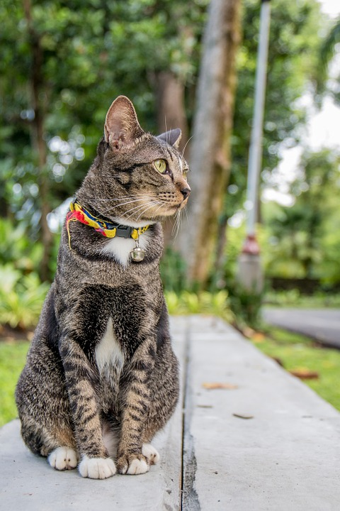 Cat, Cat Thailand, Parks, Small Indian Civet