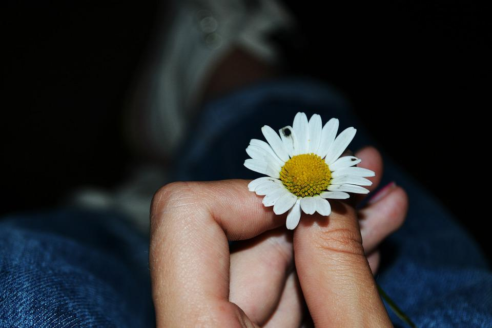 Flower, Daisy, Dark, Night, Hand, Small, Monument