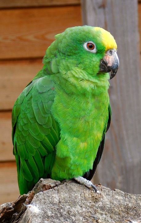 free photo small parrot green birds colorful green parrot