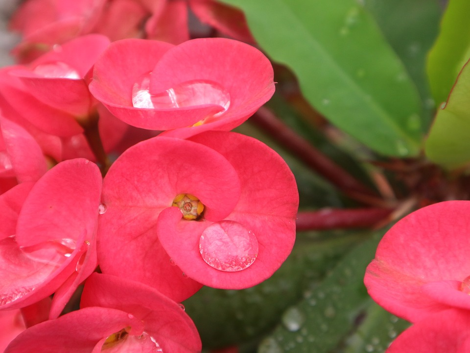 Flower, Red, Green, Fresh, Small