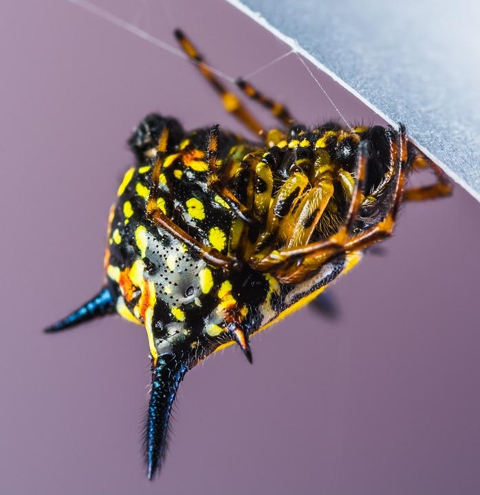 Small Spider, Spider, Arachnid, Insect, Close