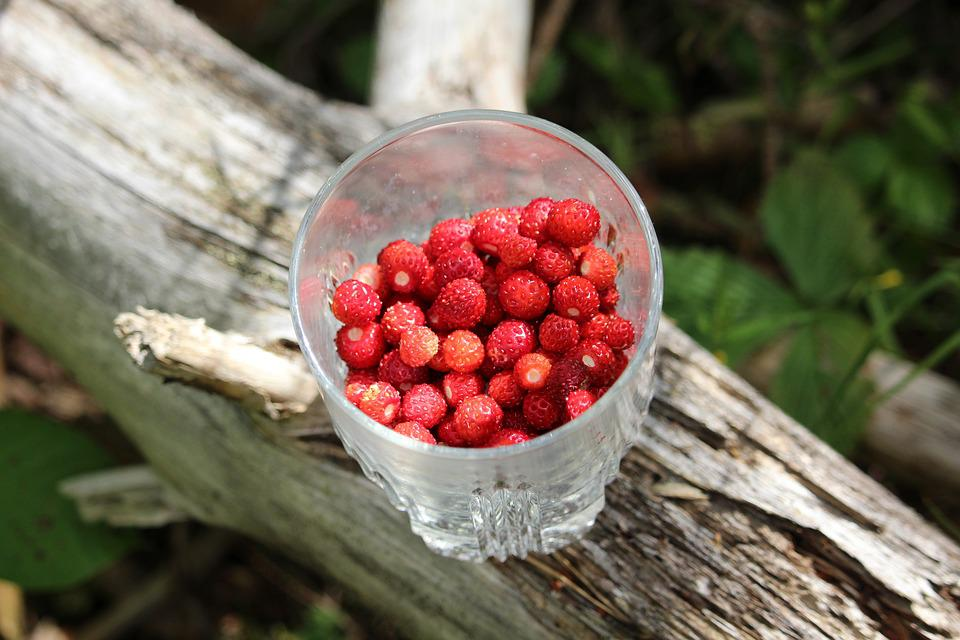 Wild Strawberries, Strawberries In A Glass, Small