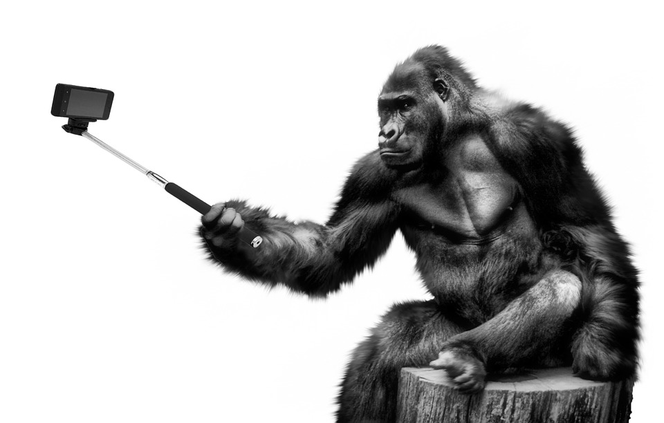 an ape taking a selfie video, possibly for market research