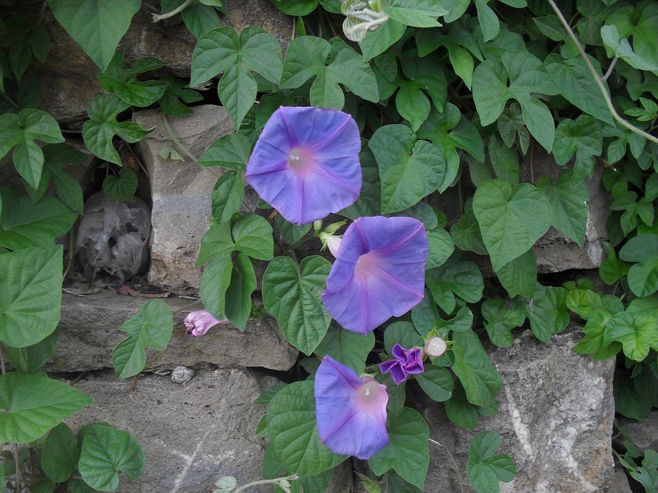Plants, Smells Of étè, Garden