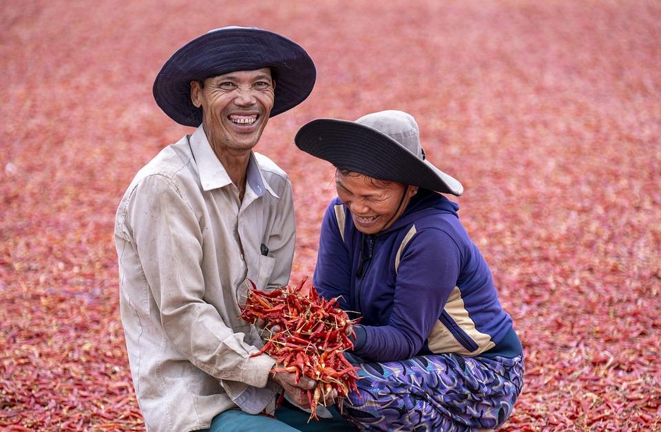 Farmers, Harvesting, Chili Peppers, Harvest, Smiling
