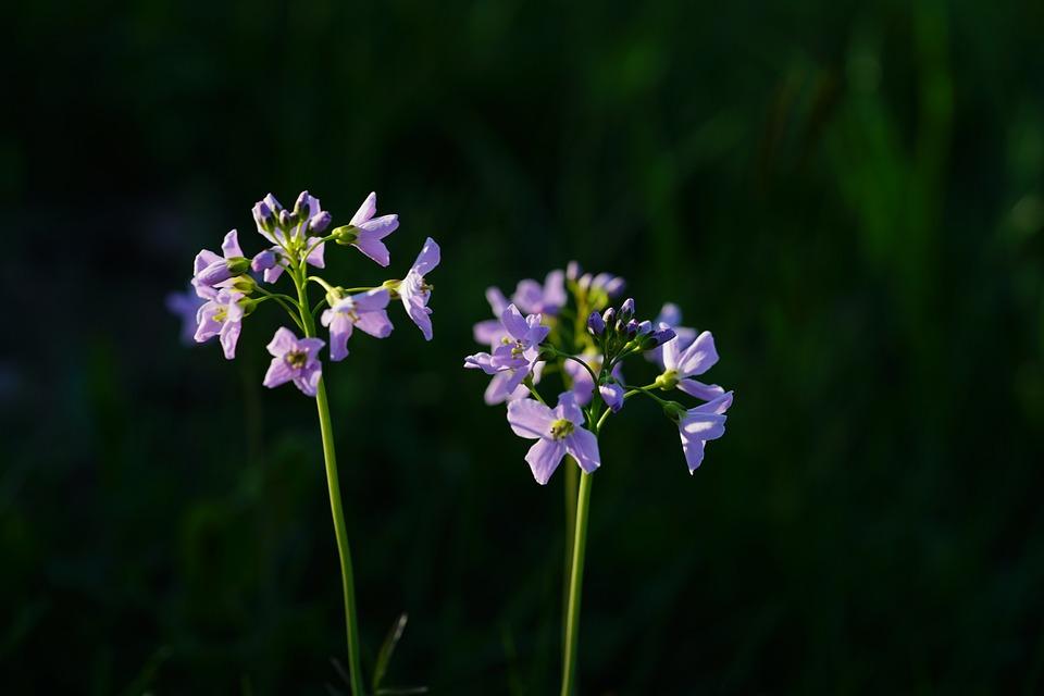 Smock, Flowers, Light Purple, Purple