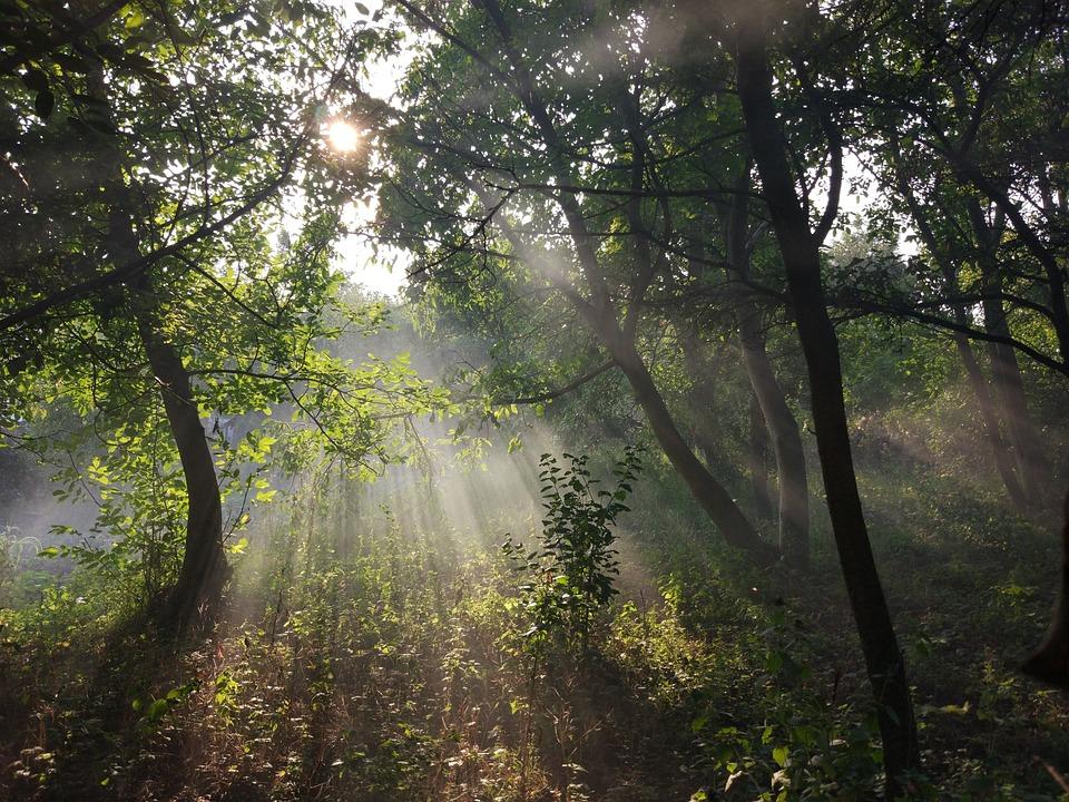 Forest, Smoke, Nature