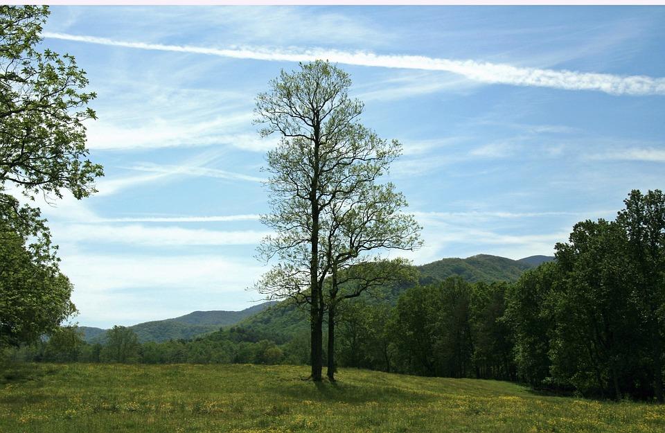 Tennessee, Smoky Mountains, Mountains, Smokies, Meadows