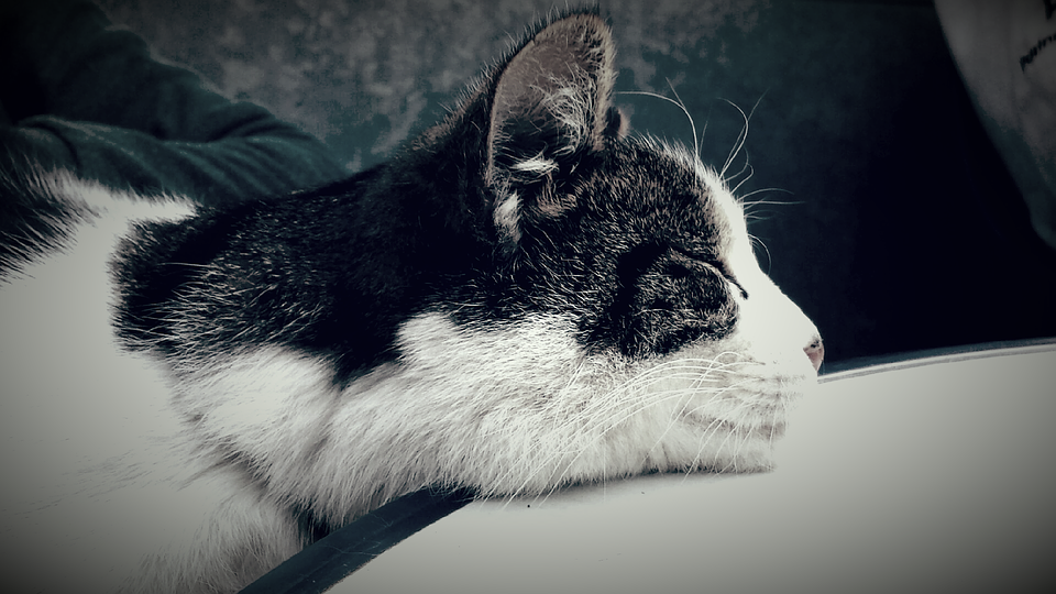 Cat, Rest, Relaxation, Crawl, Smooch, Sleep, Dreams