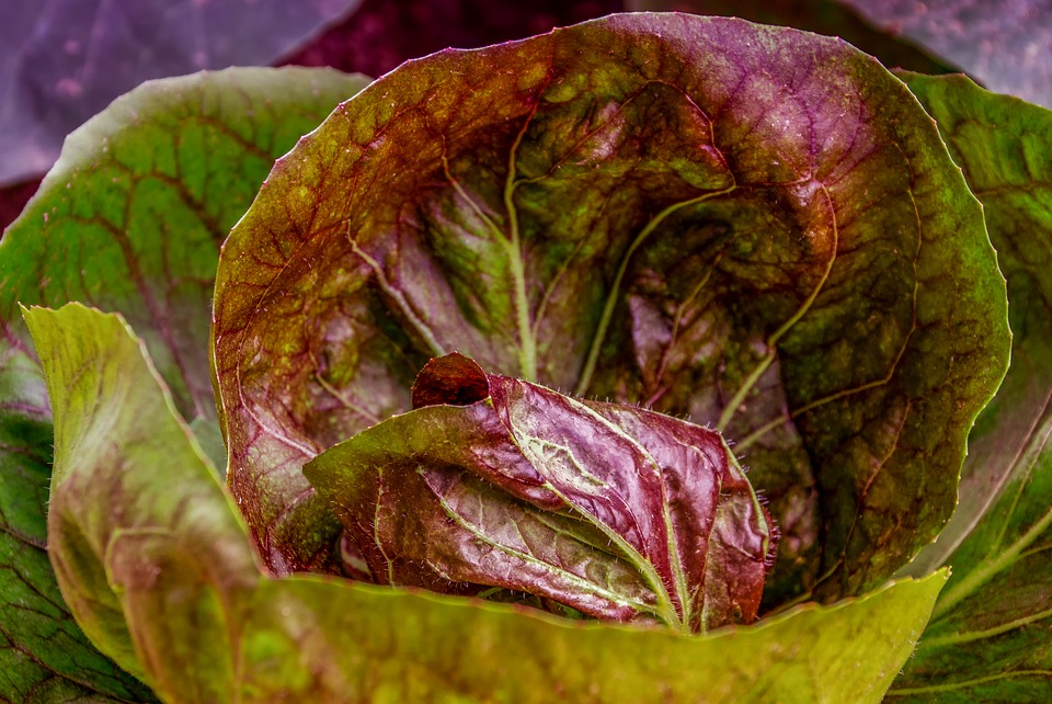 Kohl, Cabbage, Cabbage Leaves, Food, Healthy, Smooth