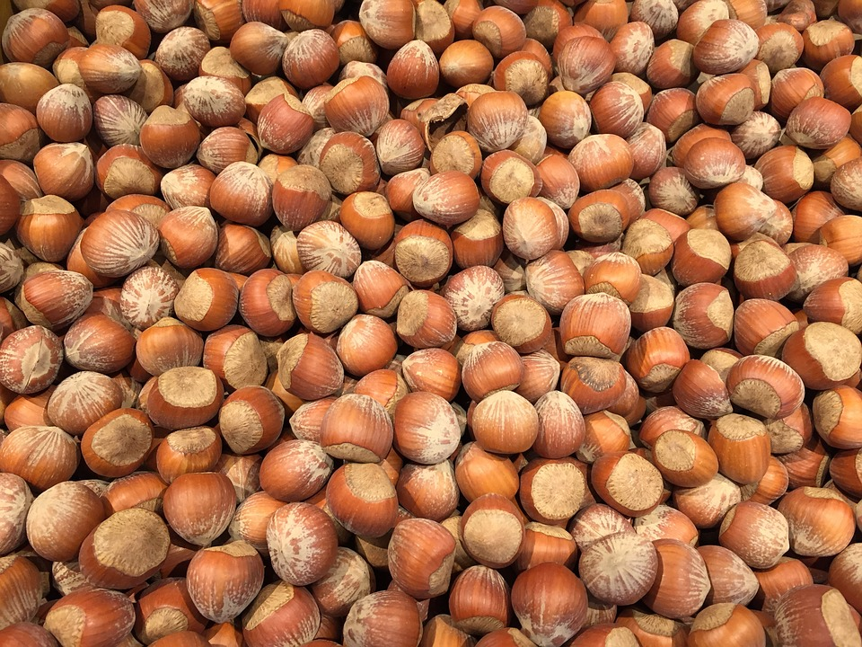 Hazelnut, Nuts, Food, Healthy, Ingredient, Seed, Snack